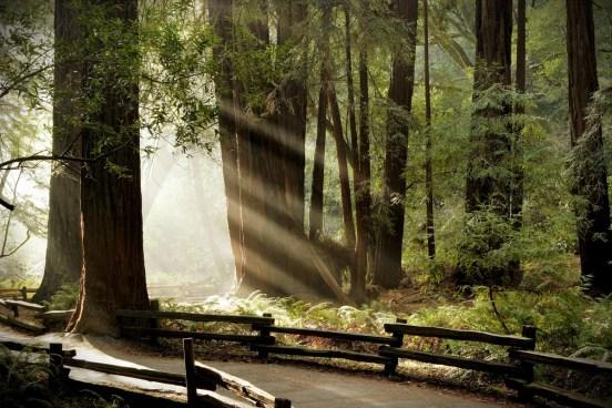 Muir-Woods-2-FOG-Small.jpg