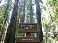 cathedral-grove
