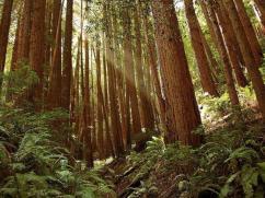 muir+woods