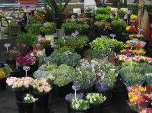 Flowers-Prahran-Market1