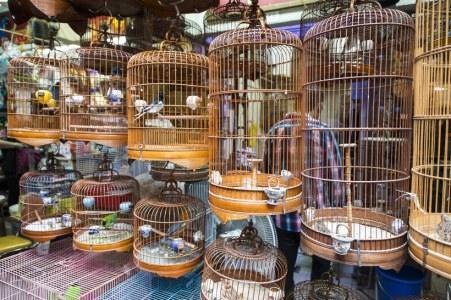 Bird-Market