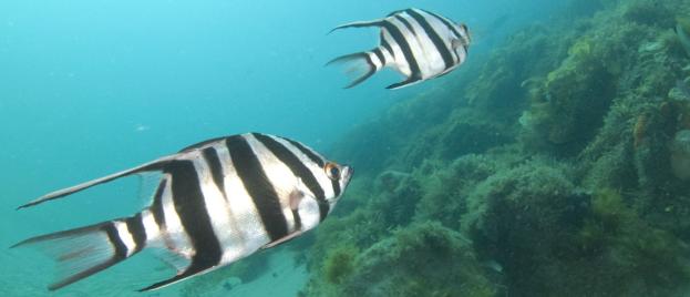 Underwater Cam